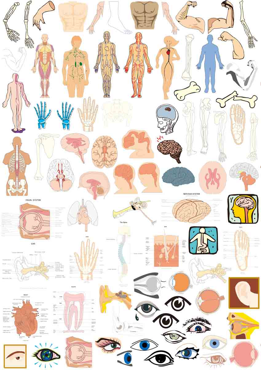 305 posters printed material panels 61 encyclopedia of human organs in human organs figure ai