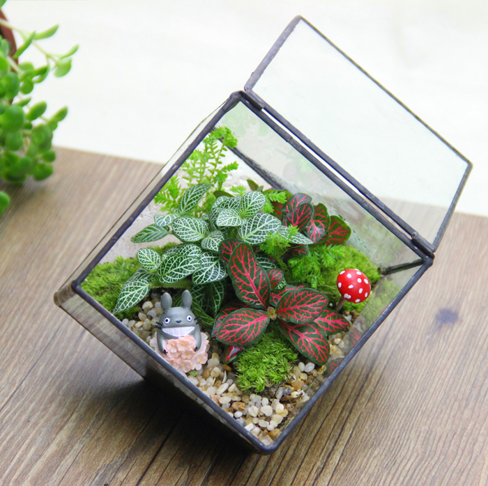 Copper glass hanabusa moss micro landscape ecology bottle diy creative office potted plants ornaments