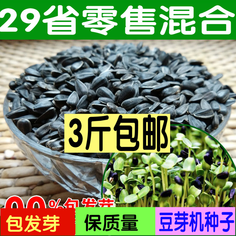 Edible sunflower seeds more than the japanese ornamental sunflower seeds sunflower seeds balcony patio
