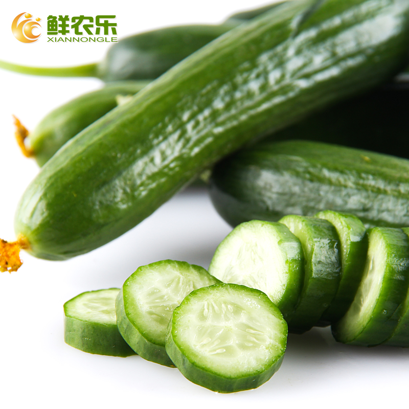 [Fresh] nongle farm small cucumber 500g/copies of seasonal fresh vegetables cucumber natural ripe melon netherlands