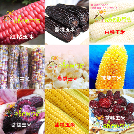Fruit corn sweet corn saccharinity high balcony garden vegetables balcony potted strawberry corn
