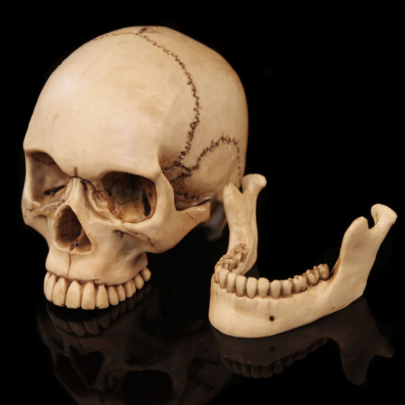 Halloween haunted house halloween decoration supplies horror spoof the whole person funny props resin off skull chin