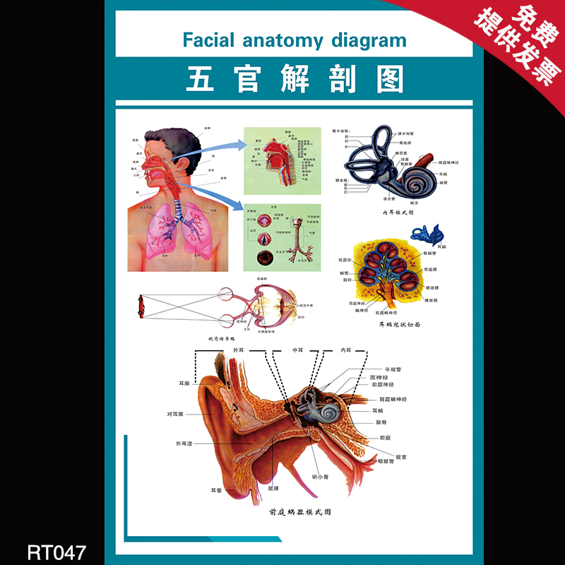 Fancy Epguides Greys Anatomy Composition Anatomy And Physiology