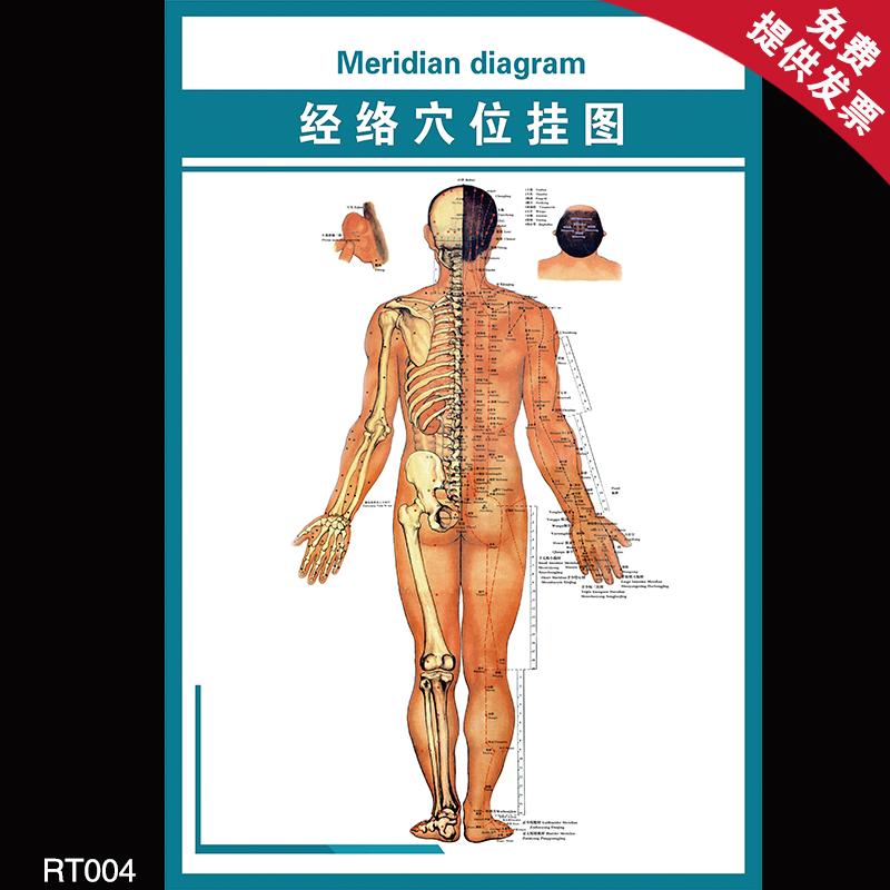 Large wall map meridian points of traditional chinese medicine acupuncture and physiotherapy health care meridian points flipchart posters decorate the back