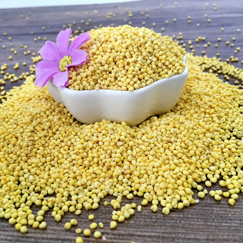 Longjiang people organic yellow millet grains whole grains 1 kg