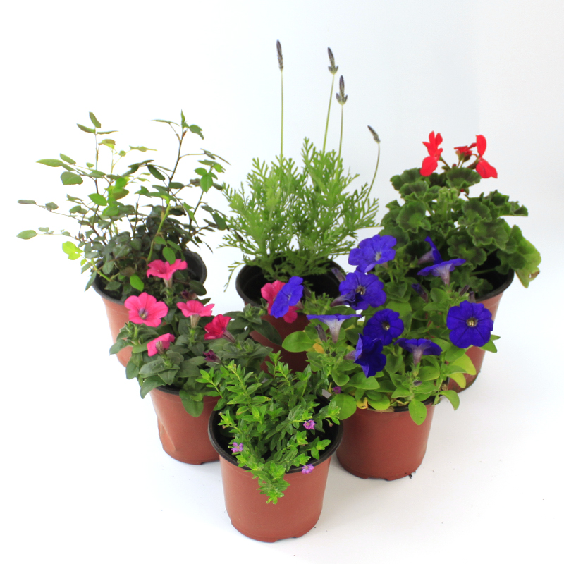Mint green jasmine gardenia flower petunia planting seedlings radiation with pots of flowers potted plants indoor plants