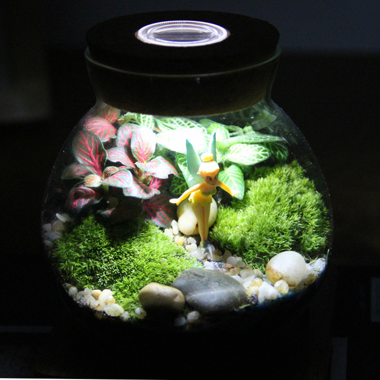 Moss moss bottle micro landscape plants creative eco bottle micro landscape ecology bottle small fairy