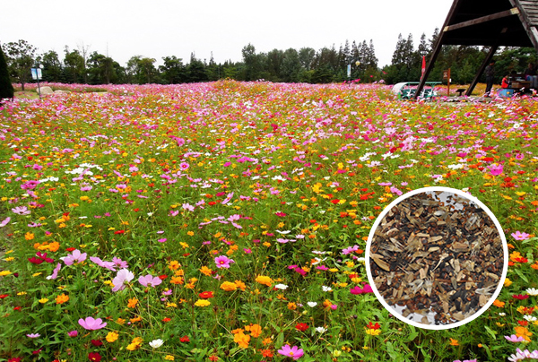 China yellow perennial flowers china yellow perennial flowers get quotations north and south perennial wildflowers combination of flower garden and lawn seed sowing seasons easy to mightylinksfo