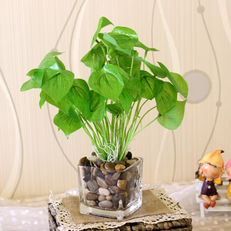 China Money Plant Leaves China Money Plant Leaves Shopping Guide At