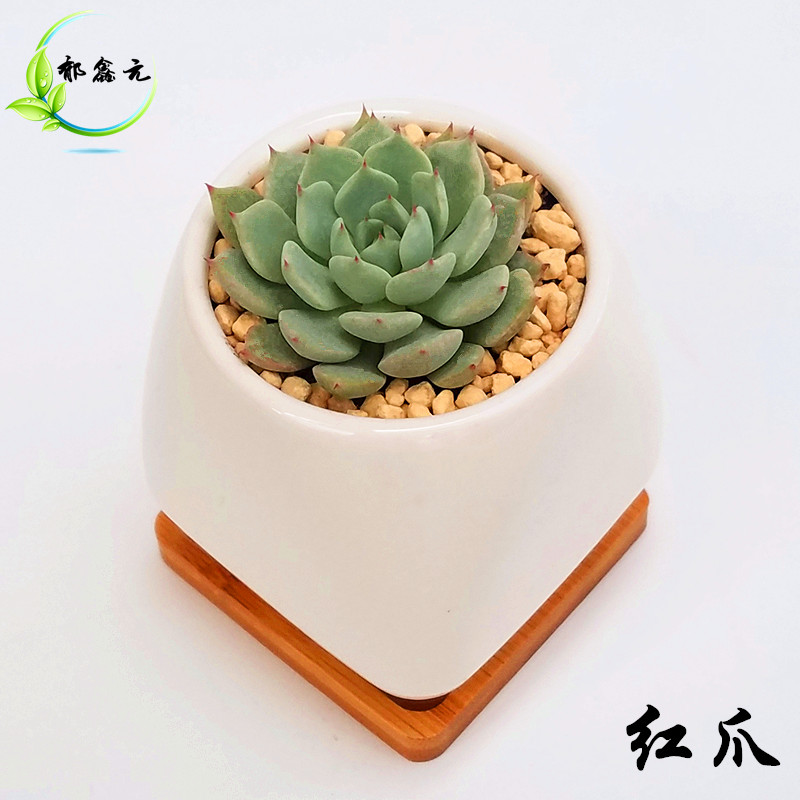 Potted succulents combination packages containing good delivery desktop desktop flowers potted plants bonsai ornaments package