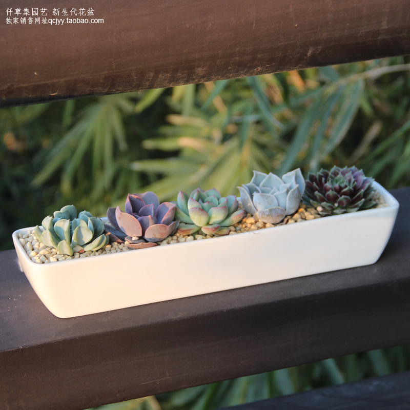 Qian grass set horticultural succulents rectangular ceramic pots white minimalist mini creative handmade indoor balcony desktop