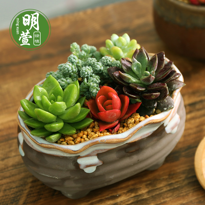 Succulents pots containing a combination of potted meat pots stone plants personalized desktop mini creative valentine's day gift