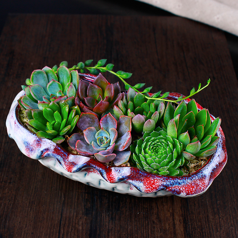 T [rhyme chinese off] potted succulents combination pots containing plants indoor potted flowers gift ideas a house A flower