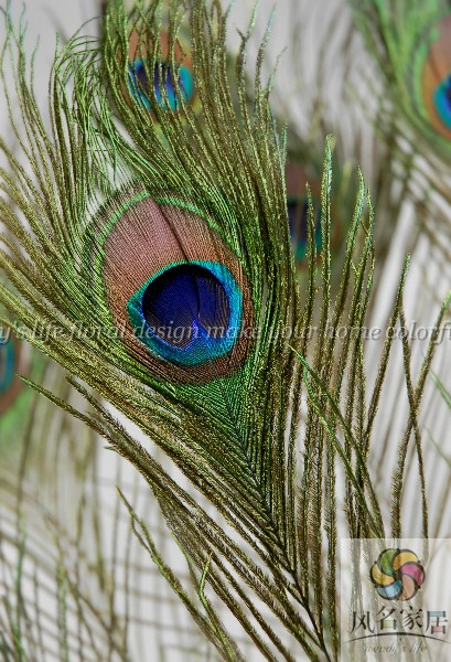 Wind name floral natural peacock feathers peacock feather eyes a price