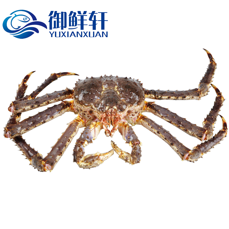 Yu xuan fresh 4 of russian imports of fresh king crab/only live fresh seafood crab aquaculture