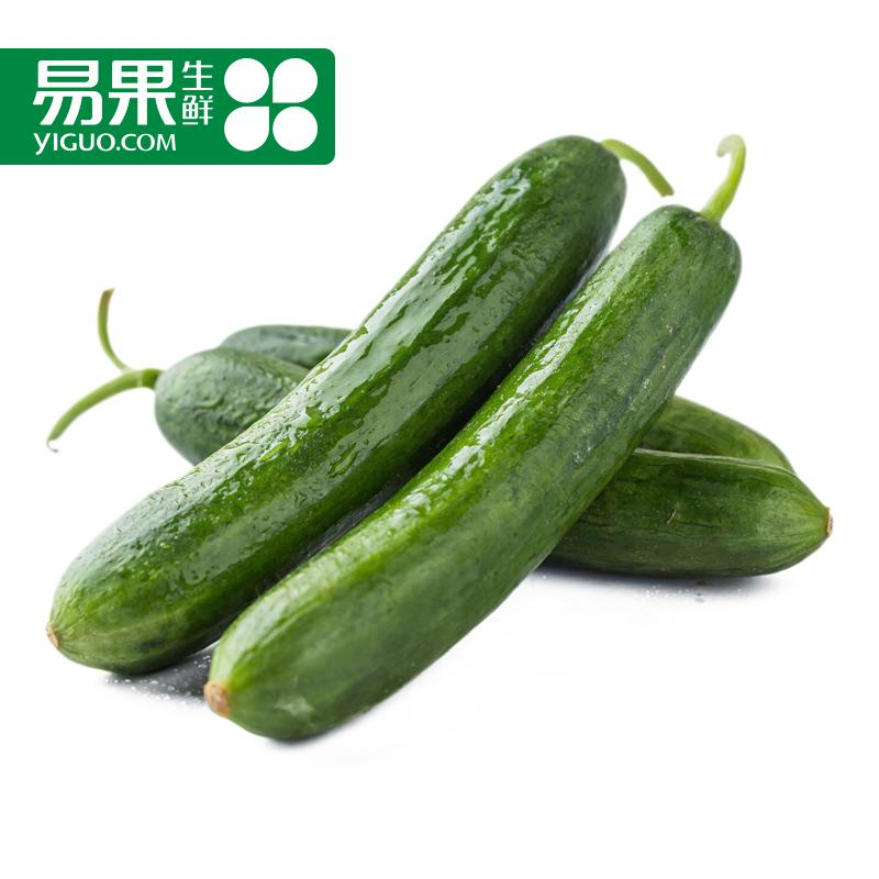 Fresh fruit [easy] shandong netherlands cucumber cucumbers fresh vegetables 450g fruit