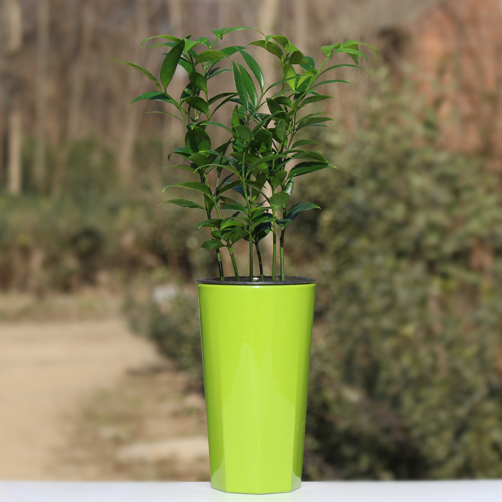 Huayi square desktop potted bonsai plants absorb formaldehyde nageia radiation hardened green plants free shipping