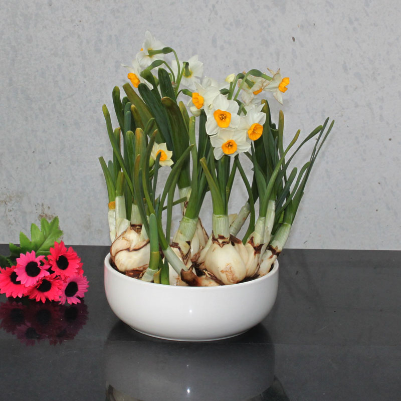 Hydroponic gardening supplies white round flat basin of water culture hydroponic pots ceramic pots hydroponic pots ceramic pots narcissus flower pot p143