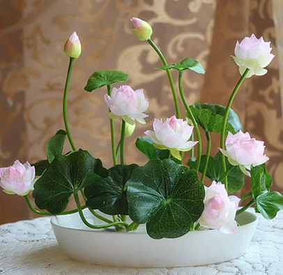 Lucky indoor potted flowers bowl lotus plant hydroponic mini naps lotus rhizome root block