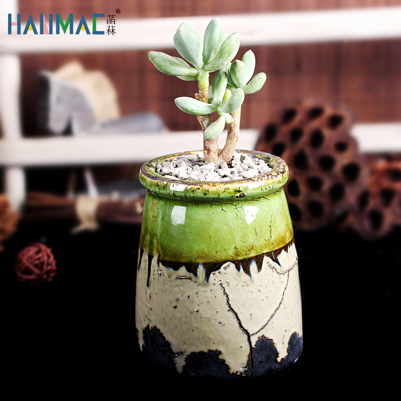 More fleshy plants potted green dill special handmade ceramic stoneware pots ceramic pots round plants specials