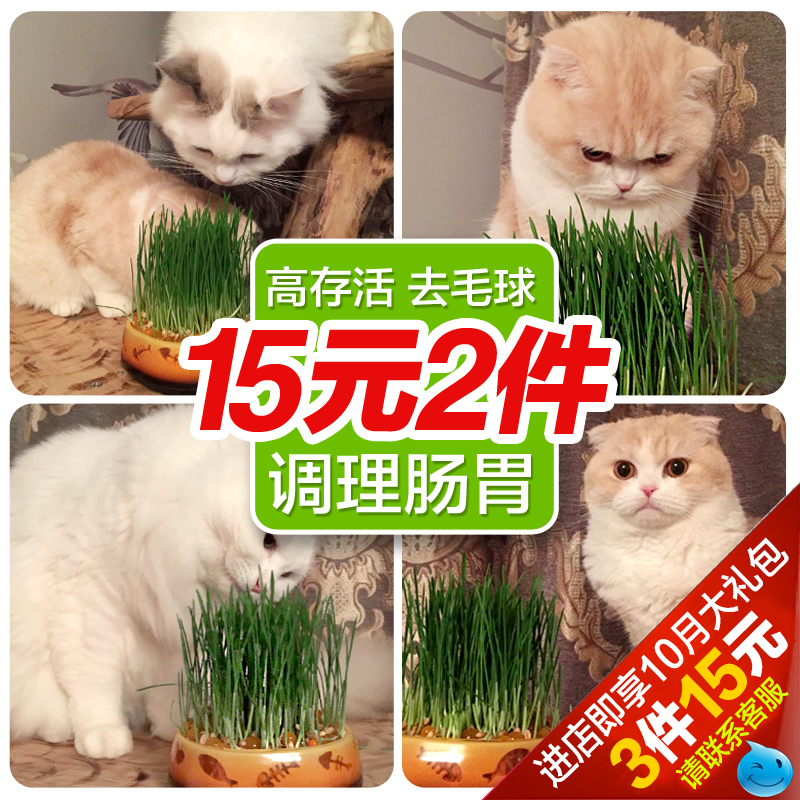 Mr. bear/pamper bear grass cultivated 2 crystal hairball cat grass planting kit cat snacks Catnip