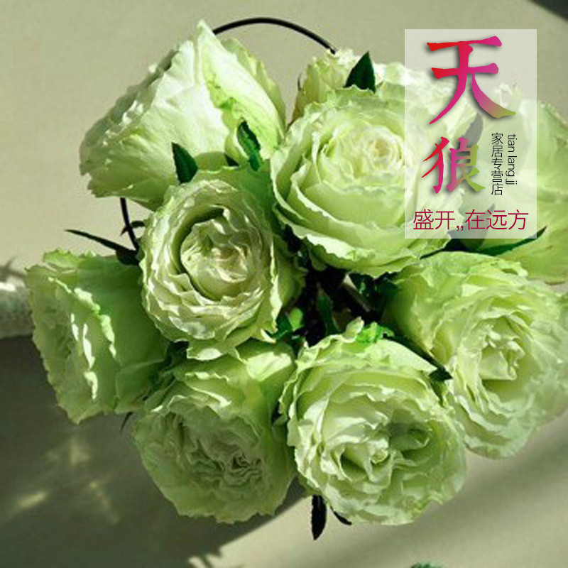 Ms. wolf month home franchise stores in europe fashion flower rose saplings climbing rose seedlings potted flower garden