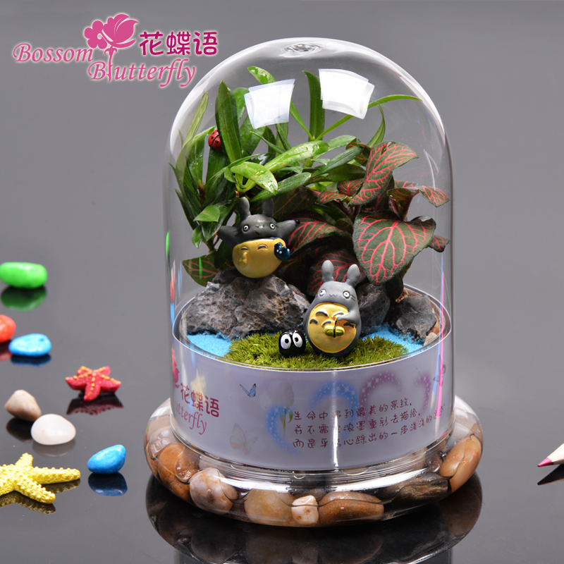 New moss micro landscape ecology bottle chinchillas potted plants trolltech creative office mini plant material diy