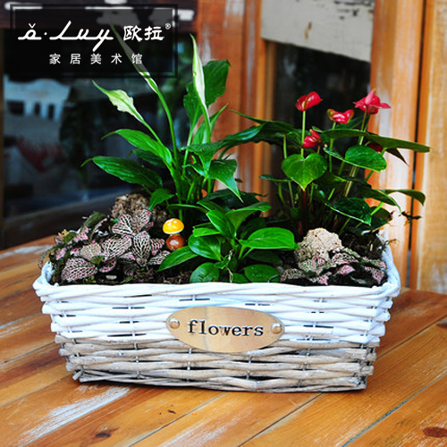 Olvy willow rectangular retro pastoral zakka fleshy plant pots pots creative personality more meat pots