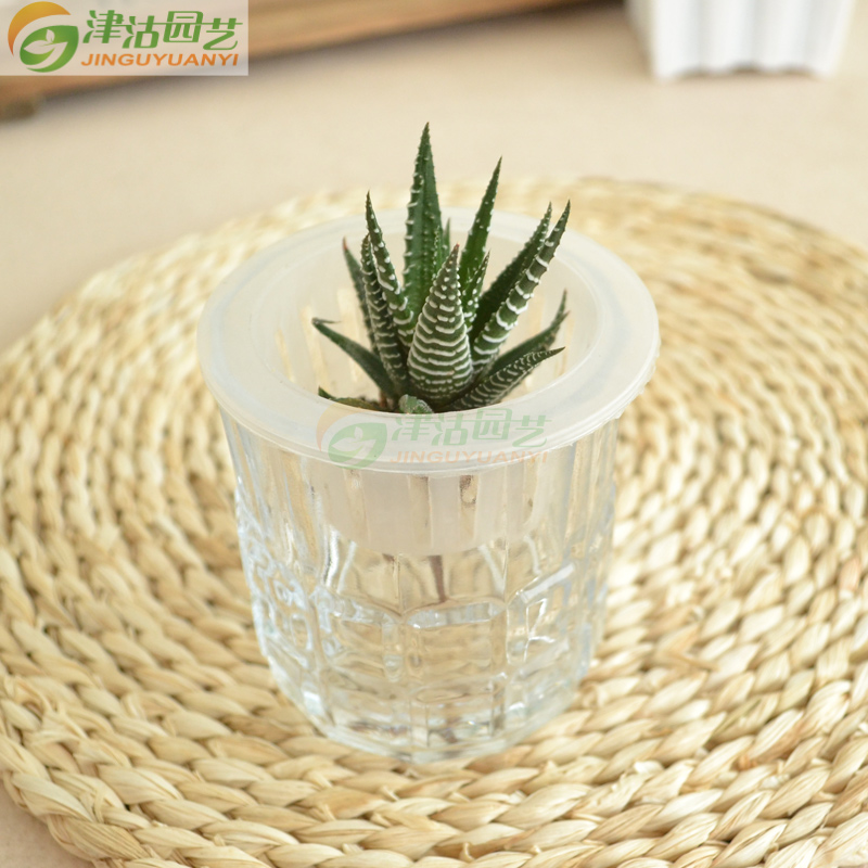 Over 18 free shipping glass glass bottle hydroponics hydroponic more meat plants flowers small cup checkered and other desktop flowerpot