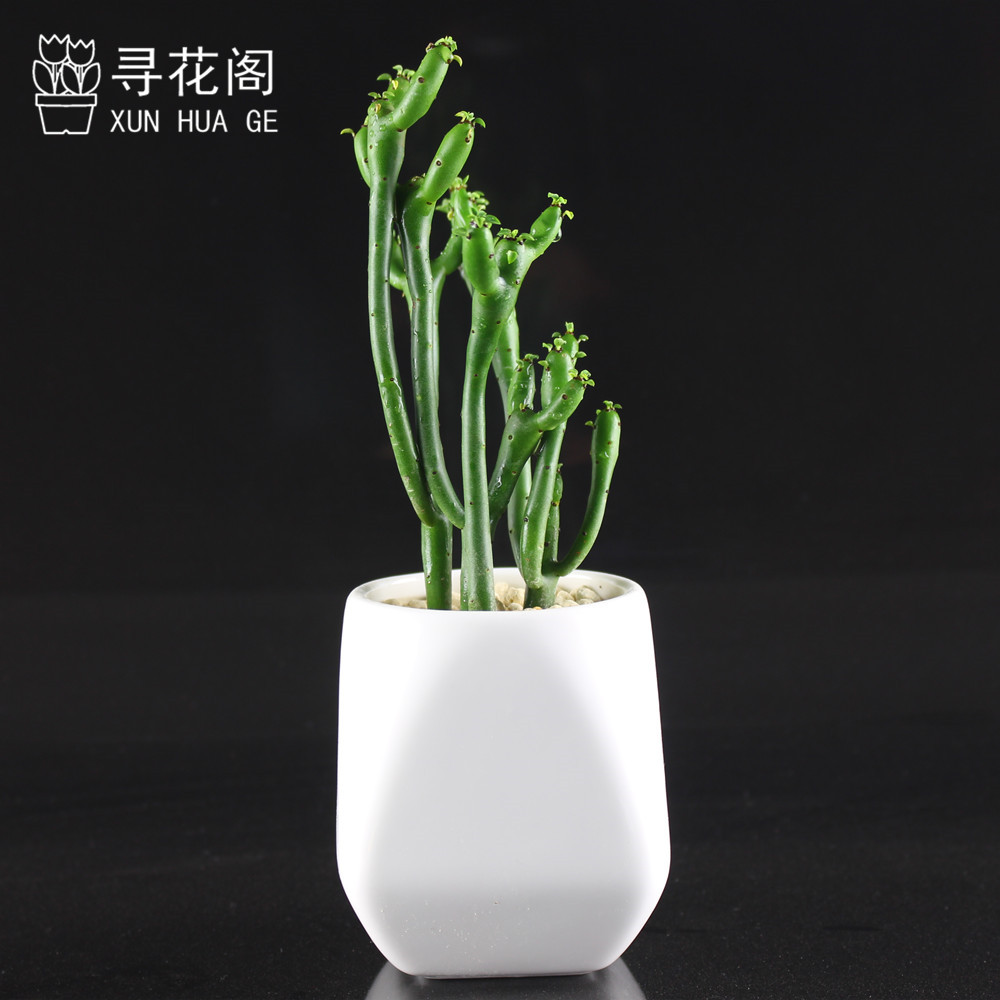 Peng coral tree bachelor fleshy succulents combination potted plants flower pots containing soil to send free shipping