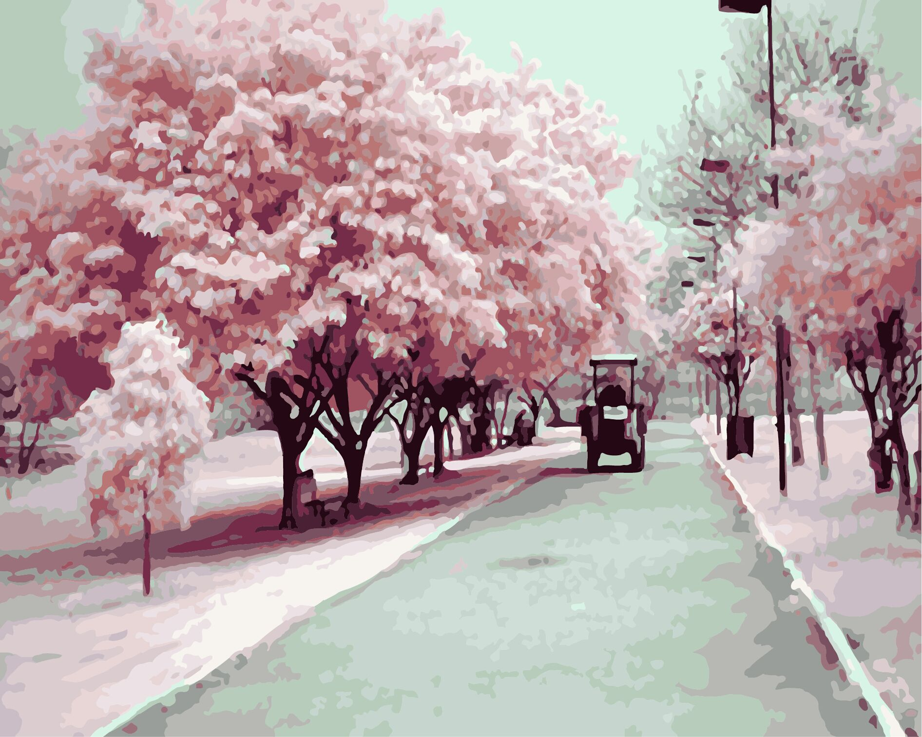china cherry blossoms colors china cherry blossoms colors shopping