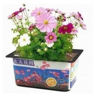 Mrs. garden planting potted shipping package desktop small pots mini flower package a + media + pots