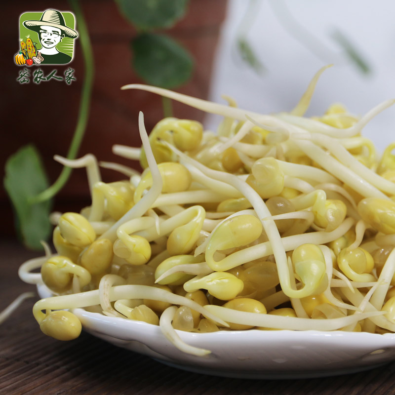[Close agricultural] people peace of mind short natural foam hair sprouts bean sprouts sprouts dish of fresh vegetables 350g