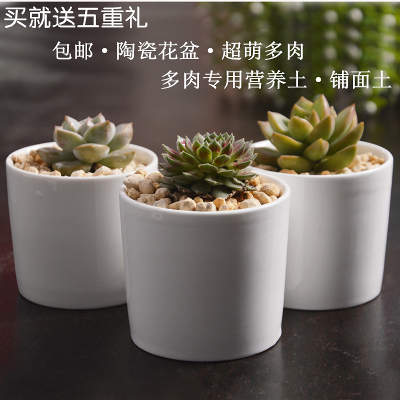 Combination of potted succulents plants potted flower plants indoor plants fleshy small potted indoor flower