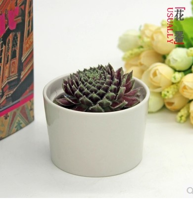 Creative ceramic pots succulents pots pots of white ceramic pots modern minimalist edge within the cup