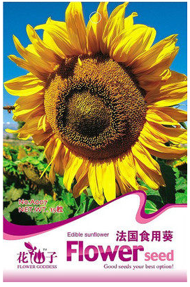 French eating sunflower sunflower seeds edible flowers and flowers balcony windowsill garden spring planting