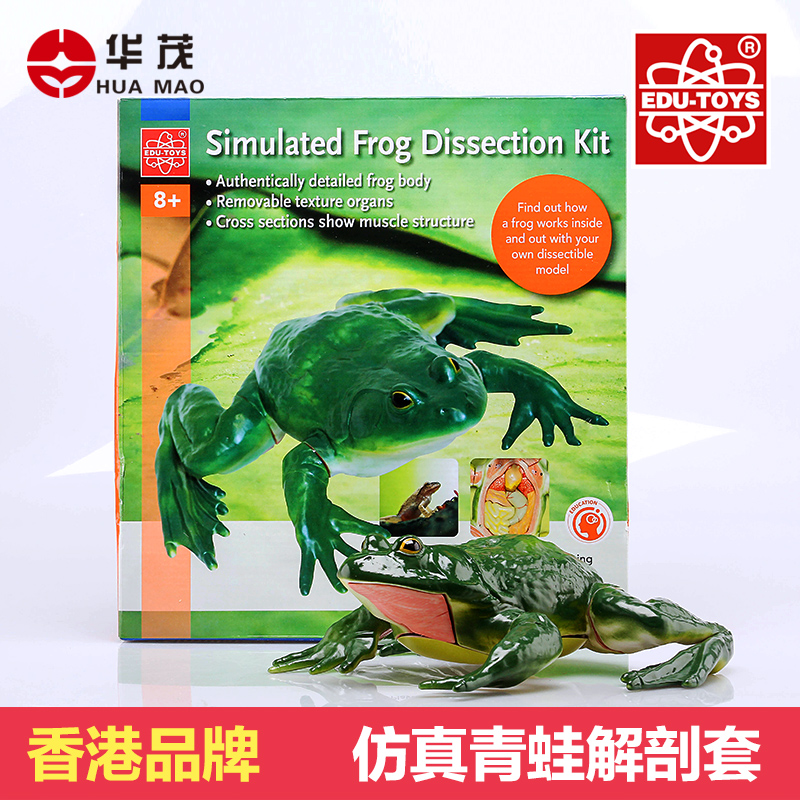 Huamao science brand hong kong zootomy model anatomical model simulation frog frog body structure