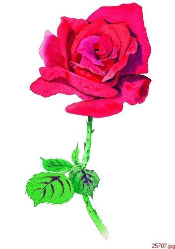 Midnight bells embroidery embroidery beginner diy kit rose 20x30 cm