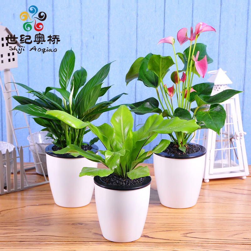 Mini mini flowers potted flowers pink palm palm potted plants office radiation absorbing formaldehyde