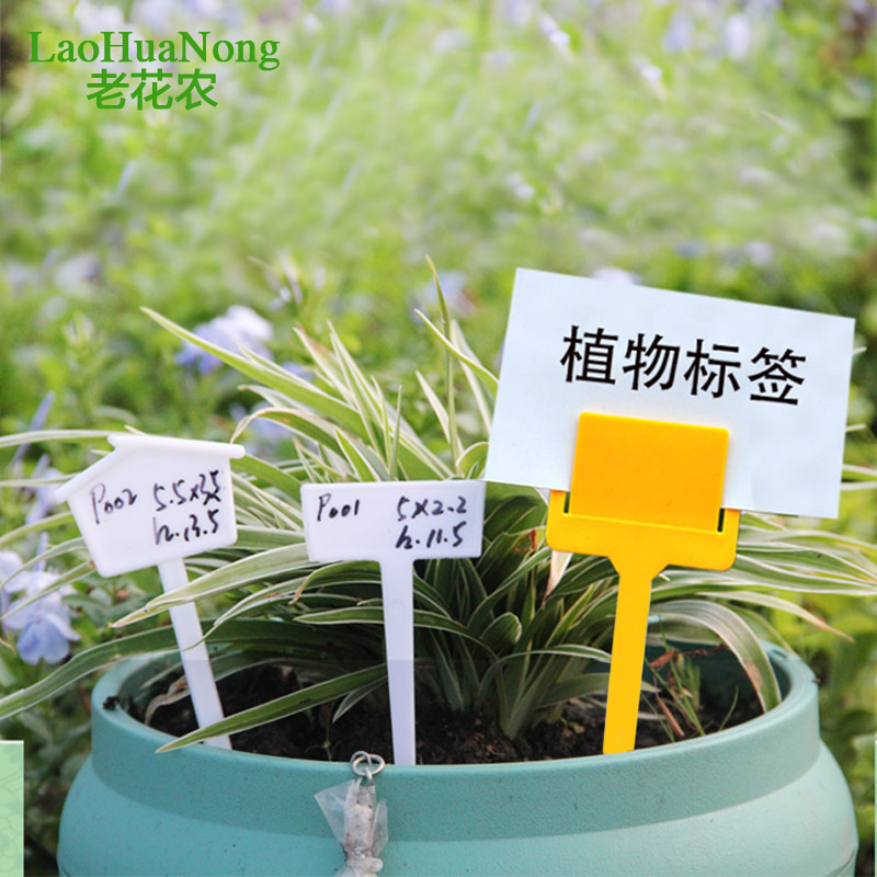 Get Quotations · Old Flower Succulents Label Large Signage Plantlet Plastic  Insert Sign Cards Inserted To Flower Gardening Accessories