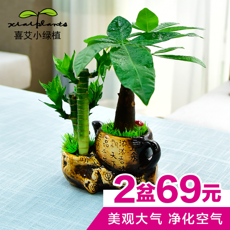 Pachira lucky bamboo office desk small potted bonsai plants absorb formaldehyde indoor bonsai green foliage plants
