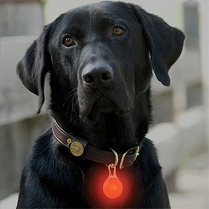 Pet luminous pendant dog tag pet led warning lights bumper lights at night fluorescent dog necklace ornaments