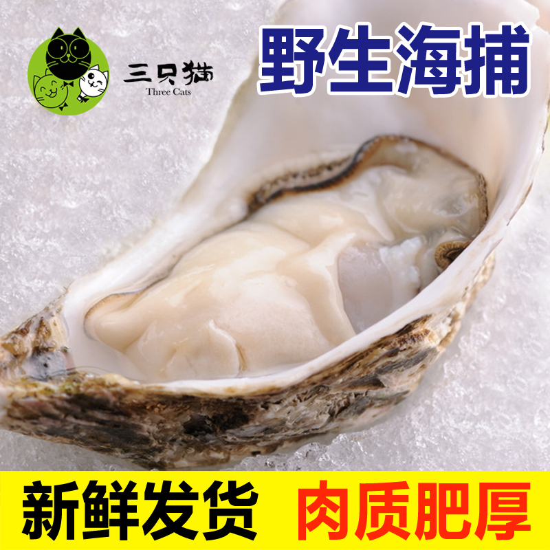 best sneakers 38bdc c60bd Three cats brand rushan oysters oysters oysters fresh seafood wholesale  wild oyster shell oyster aquaculture 500g