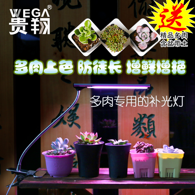 Wega waterweeds fleshy succulents grow light led grow light blue flowers and vegetables clip full spectrum lights