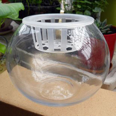 Glass vase hydroponic plant pots hydroponic ball glass ball vase vase containing colonization basket