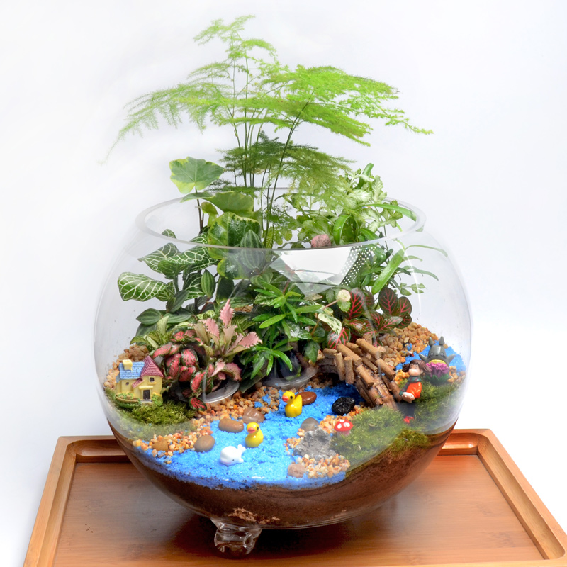 Creative gifts plants moss micro landscape ecology bottle office desktop plants pots planted tank to send a birthday gift