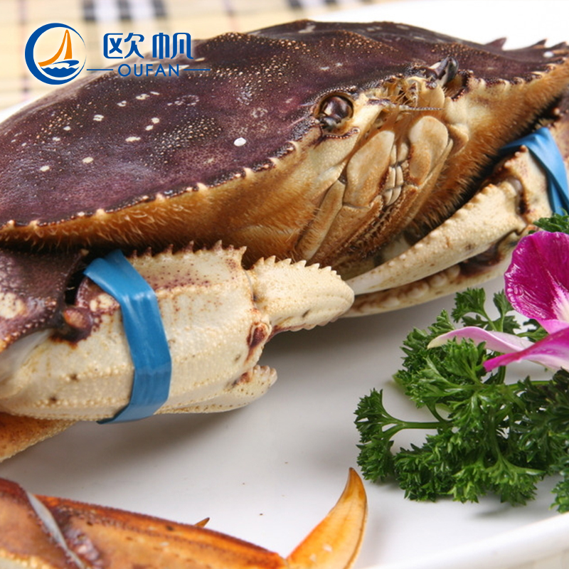 Europe sail canadian imports of fresh dungeness crab crab crab dungeness crab 700g fresh seafood aquaculture
