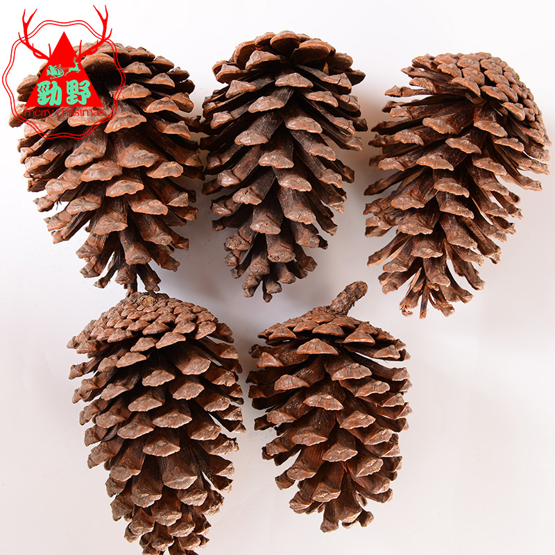 Factory outlets jin ye 10cm1 bag 5 natural pine christmas tree decorations christmas tree ornaments ichthyoses