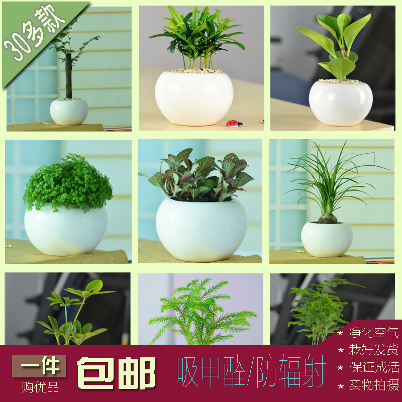 get quotations good office desktop potted plants with ceramic pots bonsai radiation asparagus jiulixiang small indoor plants