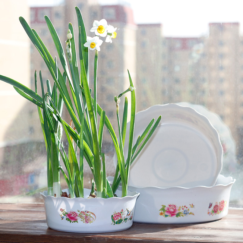 How beautiful dish creative personality hydroponic pots of coins grass bowl lotus narcissus flower pots plastic pots pots more meat and more meat plant material